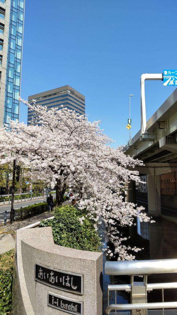 桜_KDDI前